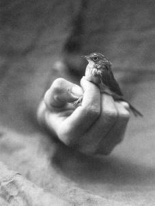 birdsoftheair_zpsfc8189a8